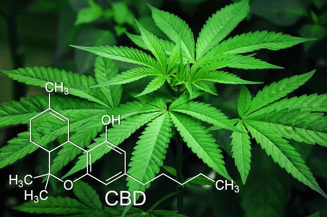 CBDオイルは大麻から取れる人体に有益な成分